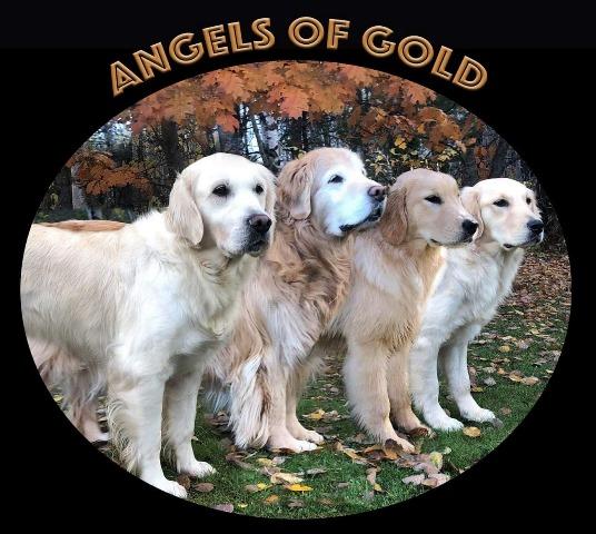 Angels of Gold, Golden Retriever Breeders