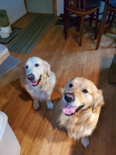 Dixie & Hank